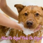 How To Repel Ticks On Dogs ?