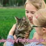 Natural And Safe Tick Repellent for Cats