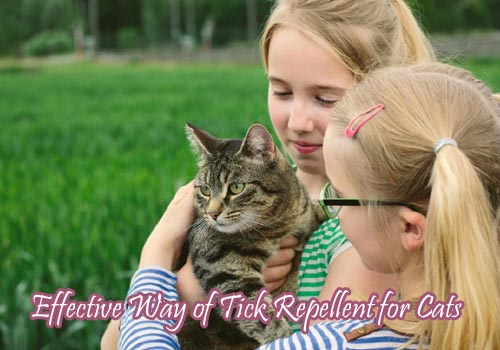 tick repellent for cats