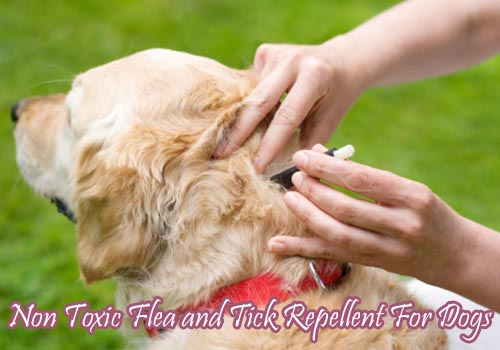 non toxic tick repellent for dogs