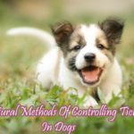 Natural Methods For Controlling Ticks In Dogs