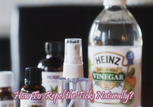How To Repel the Ticks Naturally