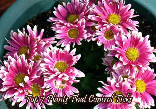 plants that repel ticks