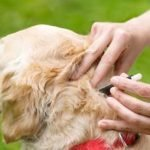 How To Repel Ticks On Dogs?