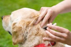 repel ticks on dogs