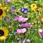 Top 7 Tick Plants That Repel Ticks