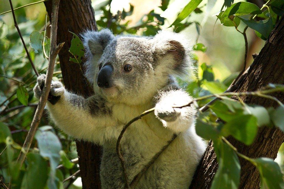 does eucalyptus repel ticks