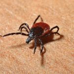 Tick Repellent Clothing Treatment
