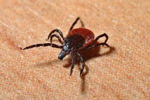 tick repellent clothing