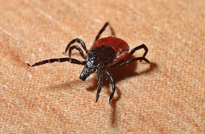 tick repellent clothing