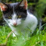 Best Tick Repellent for Cats