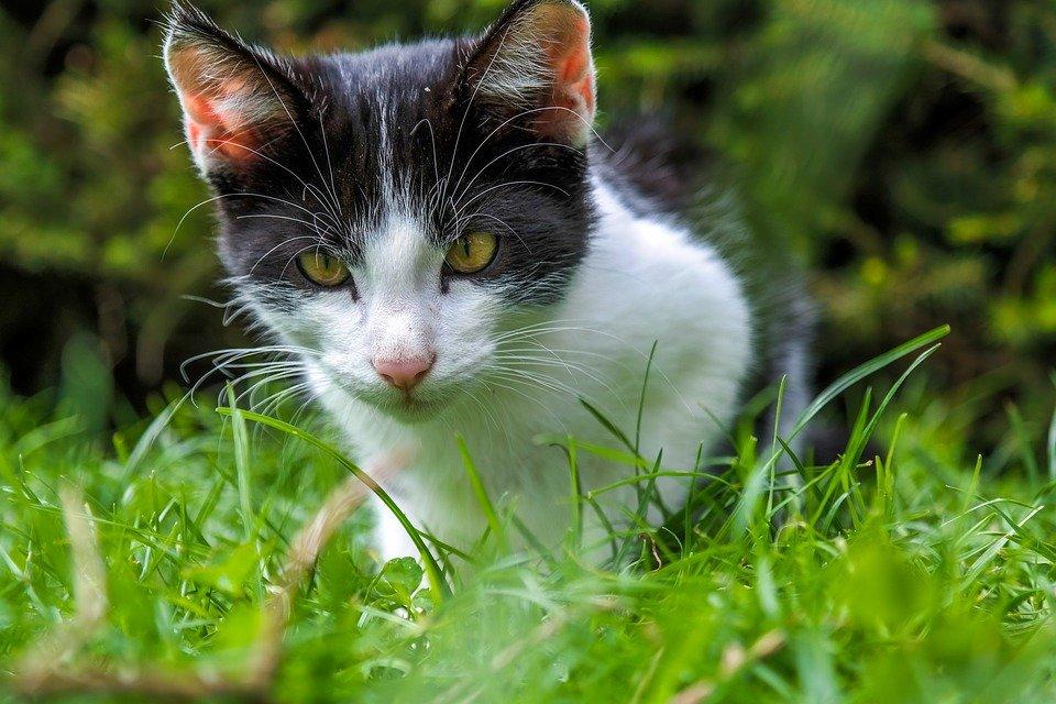 Natural Ways To Keep Cats Away