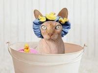 Cat Shampoo -Do You Need To Bathe Cats?