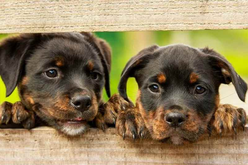 which dog flea and tick control is the best