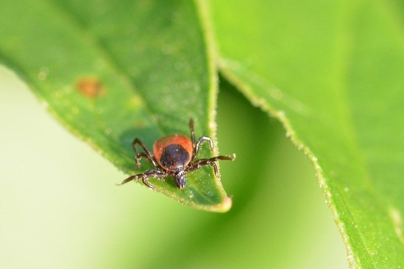 ticks in yard